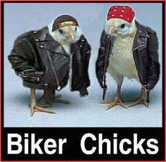 Biker Chicks. sent to me by my mom :) Hahah - hilarious!