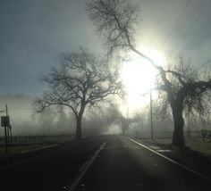 Sun breaking through the fog in Napa Valley.