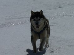 Khumbu doing what he loves to do, free running in the snow.