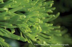 Green Saffina Macro Fine Art  Photo Print by BeckyTylerArt on Etsy, $20.00