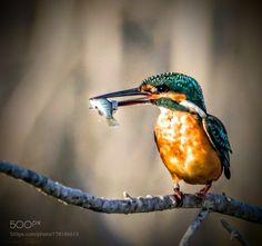Untitled by altrabeensaleem #animals #animal #pet #pets #animales #animallovers #photooftheday #amazing #picoftheday