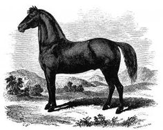 American Morgan Horse Association- Origin of the Morgan Horse Justin Morgan was a teacher, composer, businessman, and horseman who had moved to Randolph, Vermont, from Springfield, Massachusetts. He acquired a bay colt, born in 1789, giving him the name Figure. As was the practice of the day, Figure became known by his owner's name, the Justin Morgan horse. This colt was the founding sire of the Morgan breed. - See more at…