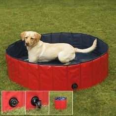 Keep Cool Dog Pool my bubba would love this!! He loves the water!!
