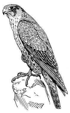 Awesome Black Falcon Tattoo Design