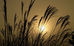 soft wind by Doumanis