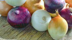 I když je zázvor exotická rostlina, je na pěstování neuvěřitelně nenáročná. Onion, Vegetables, Food, Gardening, Onions, Essen, Lawn And Garden, Vegetable Recipes, Meals