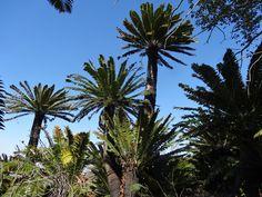 Modjadji Nature Reserve - TL