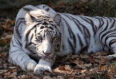 The Cincinnati Zoo...one of my favorite places as a kid and teenager.  Loved the white tigers.