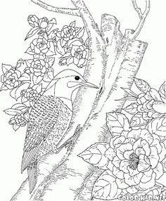 The Free Coloring Pages World Of Animals Will Introduce Children To Birds Topic Download And Print Out Right Away