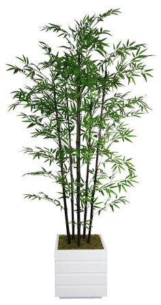 Laura Ashley VHX106211 78-Inch Black Bamboo Tree in 14-Inch Fiber Stone Planter ** Click image for more details.