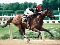 Personal Ensign(1984)(Filly)Private Account- Grecian Banner By Hoist The Flag. 4x5 To War Admiral. 13 Starts 13 Wins. $1,679,880. Won Frizette S(G1), Beldame S(G1) Twice, Whitney H(G1), Hempstead H(G1), Shuvee H(G1), BC Distaff (G1), Molly Pitcher H(G1), Maskette H(G1). U.S. Champion Older Filly Of 1988. Ky Broodmare Of The Year In 1996.