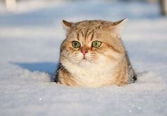 """"""" Excuse me yeah HUMANS...There is a reason fat cats should not be outside in the winter...you will never find them again."""""""