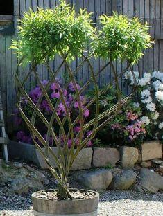 New Ideas Garden Design French Topiaries Lotus Garden, Dream Garden, Garden Art, Garden Design, Bonsai Garden, Garden Planters, Plant Wallpaper, Living Fence, Unique Trees