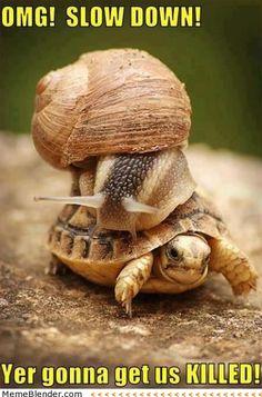 OMG slow down!