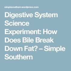 Digestive System Science Experiment: How Does Bile Break Down Fat? – Simple Southern
