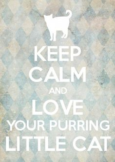 keep calm and love your purring little cat Keep Calm Posters, Keep Calm Quotes, Crazy Cat Lady, Crazy Cats, Keep Calm And Love, Love You, Keep Calm Wallpaper, Calming Cat, Keep Calm Signs