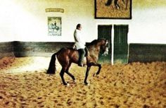 """""""I most appreciate the rider who takes pains to render his horse light, insisting absolutely on impulsion, without the necessity to be tense, or to make great efforts."""" Nuno Oliveira"""