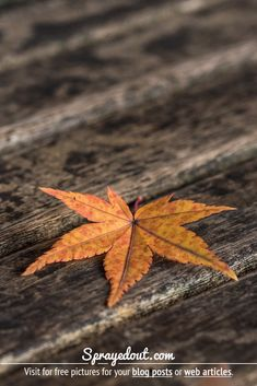 Maple tree leaf in Autumn. Free picture for bloggers of a small maple tree leaf on a bench. #autumn #maple #leaf #mapleleaf #photography Fall Leaves Pictures, Fall Pictures, Close Up Pictures, Beautiful Pictures, Amazing Photos, Nature Images, Nature Pictures, Leaf Photography, Maple Tree