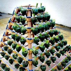 They used wood posts and 2L bottles. Could create this with cinder blocks and shower rods? Then use little metal hooks to tip plants towards the sun with terra cotta pots. HMM