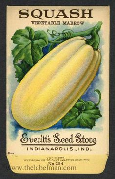 EVERITT'S SEED STORE,  Squash 294, Vintage Seed Packet