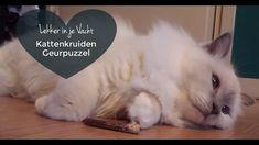 Kattenkruiden | Maak een geurpuzzel voor je kat