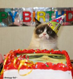 Grumpy Cat turns one year old! (April 4, 2013) Photo from grumpycats.com