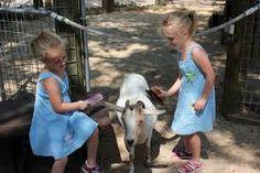 Mobile Petting Zoo - petting zoo rental - birthday party zoo rental  Irvine, Riverside, LA, Orange County, Santa Ana, and surrounding areas!