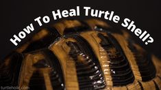 do turtle shells heal how to heal a cracked turtle shell Turtle Care, Pet Turtle, Turtle Tank Filters, Turtle Shells, Healing, Future, Pets, Future Tense, Animals And Pets