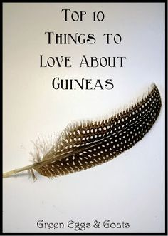 Top 10 Things to Love About Guineas