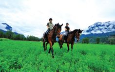 PHOTO BY DAVE STEERS - Riding Pemberton's beautiful meadows is an every day practice. The Dream of Dreamcatcher Meadows In 10 years, these Hanoverian horse-farm owners have gone from start-up to top of the class by Cathryn Atkinson Horse Shop, Horse Farms, Whistler, Beautiful Horses, Equestrian, Dream Catcher, Training Center, 10 Years, Animals