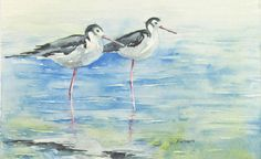 Buy original hand painted watercolors at 6catsart on etsy.   These beautiful shore birds can be found of both the east and west coast of the United States.  Title: Pair of Black Necked Stilts Image size: 4 x 6 inches (10 x 15.3 cm) Medium: Winsor and Newton Artist Quality Watercolor on 140lb Arches Coldpress Watercolor paper