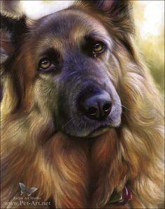 German shepherd portraits by Katja Turnsek