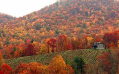 Fall in Chattanooga, Tennessee .  The leaves in East Tennessee in the fall are just beautiful.