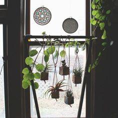 小さな鉢を窓辺に吊り下げて。 別の鉢から伸びる蔓を絡ませているのも、心憎いアイデア。 ぶら下げ方に高低を加えれば、リズムが生まれる。
