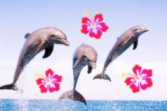 Water Aesthetic, Beach Aesthetic, Summer Aesthetic, Aesthetic Photo, Aesthetic Pictures, Summer Dream, Summer Girls, Key West, H2o Mermaids