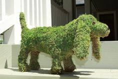 Product detail | Susa's Topiary Zoo | Animal topiaries | Moss topiaries | English Ivy planted topiaries