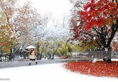 Image result for snow on autumn leaves
