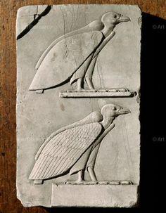 , Animal Alone, Ramses III (r.c.1187-1156 BCE), Relief, Temple of Ramses III, Medinet Habu, Thebes, Egypt, Vulture