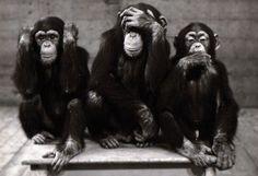 Sagesse des 3 singes  Le sourd,  le muet et l'aveugle