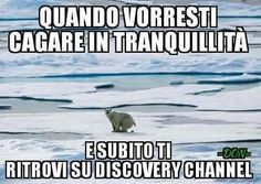 Maybe Meme, Funny Images, Funny Pictures, Satirical Illustrations, Italian Memes, Funny Jokes, Hilarious, Serious Quotes, Just For Laughs