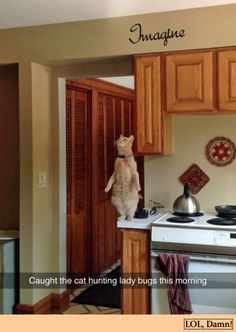 Funny Animal Pictures Of The Day – 19 Pics - Daily LOL Pics and pets baby tv cartoon network, and pets yahoo dogs breeds, and pets boarding philippines lotto results, hipster animals and pets lion cubs tattoos ivy. Cute Funny Animals, Funny Animal Pictures, Funny Cute, Cute Cats, Silly Cats, Funny Kitties, Top Funny, I Love Cats, Crazy Cats