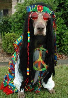 Costume for the dog!! Peace!  The whacky things we do to our dogs !!! :)