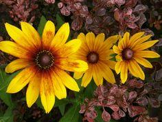 In my garden by Ela Zadora