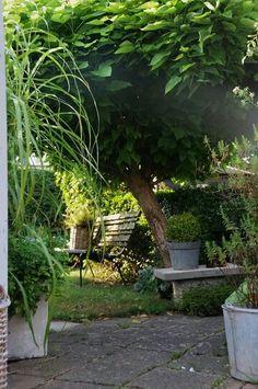 My garden in Sweden 184