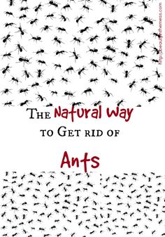 Natural Way to Kill Ants The Natural Way to Get Rid of Ants - I need this!!