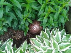 Penny Ball. Pennies are good for keeping the soil acidic for those plants that like it that way.