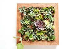 Succulent Vertical Garden Square by FleurieuGifts on Etsy