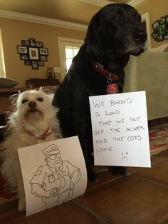 Dogs with Signs of Shame | Dog Wall of Shame #dogshaming