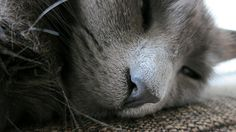 wolfie taking a nap Take A Nap, Take That, Cute, Pictures, Animals, Gatos, Photos, Animales, Animaux