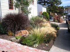 Front garden of grasses